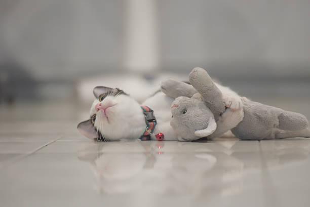 Cat play with kitten doll lay on floor picture id603186968?b=1&k=6&m=603186968&s=612x612&w=0&h=kkbyucx80cnqpsg70vx3rqps4bpbwpqbflqokawd2ve=