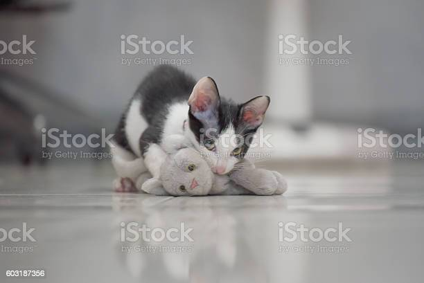 Cat play with kitten doll lay on floor picture id603187356?b=1&k=6&m=603187356&s=612x612&h=kp1hhqpzzj ekwa5g0 ugu2l3bogvje6vi7dcxaptxg=
