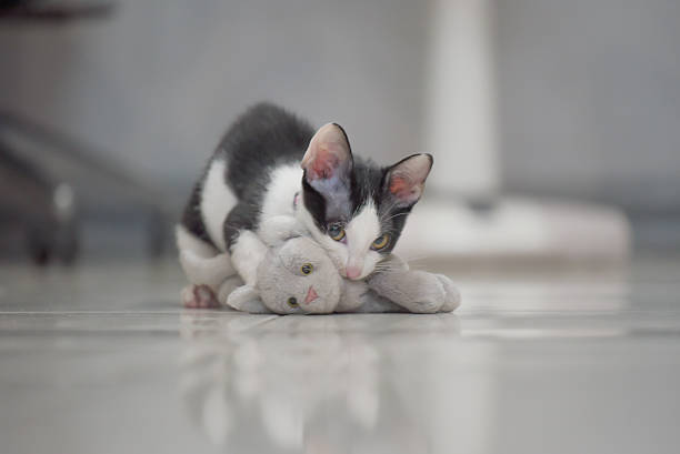 Cat play with kitten doll lay on floor picture id603187356?b=1&k=6&m=603187356&s=612x612&w=0&h= vjptw jojmufkv1wjg4mtwhfmrnnc3aerdozc1nauy=