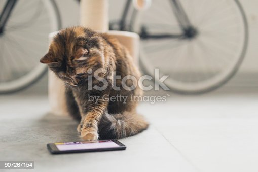 istock Cat playing a game on the phone 907267154