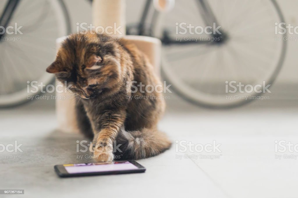 Katze, die ein Spiel auf dem Handy – Foto