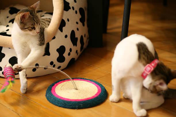 Cat playing a trick picture id527839541?b=1&k=6&m=527839541&s=612x612&w=0&h=cewv2syhhnpf4illkkdtbs1yzieh4nxkwmtqt7cd2v4=