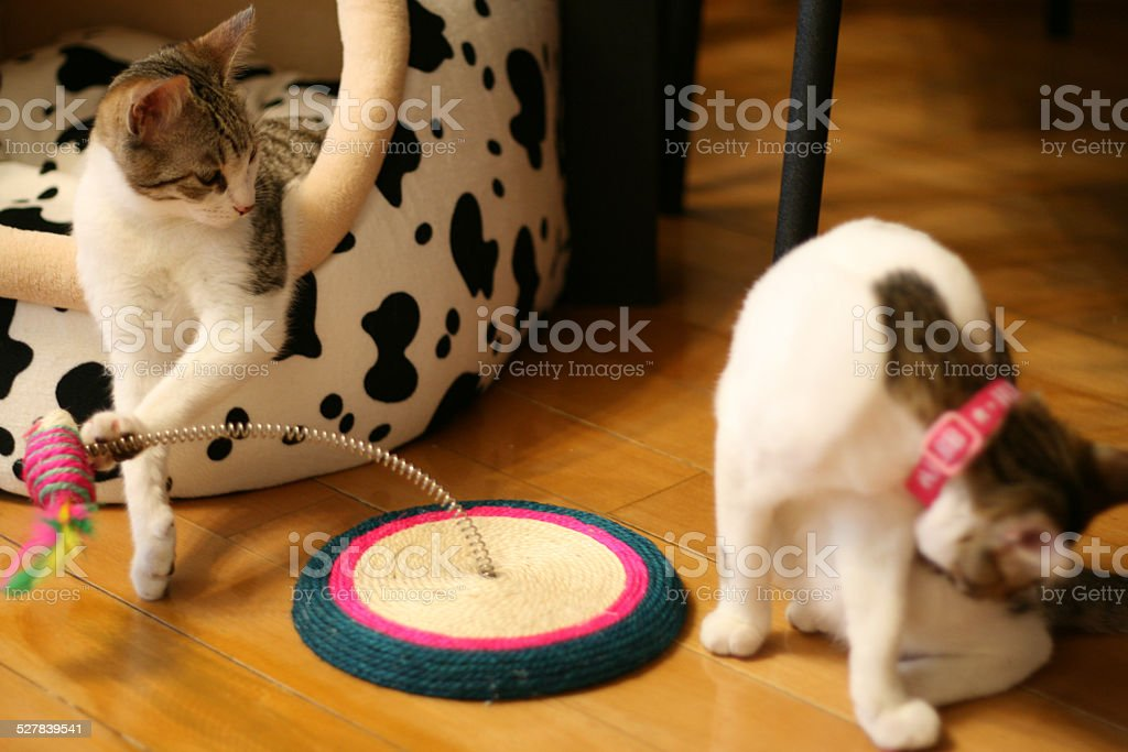 Cat playing a trick stock photo