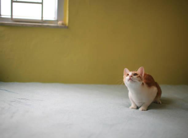 Cat playing have fun picture id1146266413?b=1&k=6&m=1146266413&s=612x612&w=0&h=hrfoyvge ebjggann8bkcvtnk9wzjrkfvt6ji69uf00=