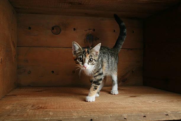 katze spielen in einer box - suche katze stock-fotos und bilder