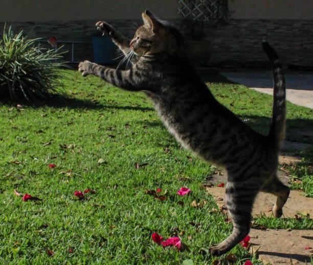 Cat playing in the garden picture id1220807727?b=1&k=6&m=1220807727&s=612x612&w=0&h=td0znattynihnagnbydsepgztss568nxtgfejihijsk=