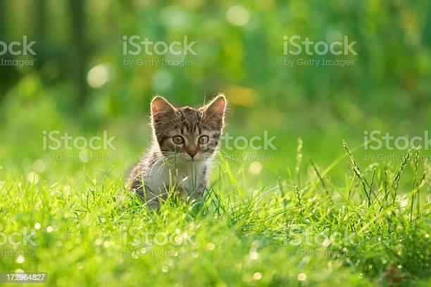 Cat playing on the grass picture id172964827?b=1&k=6&m=172964827&s=612x612&h=la7n0dmypd0mrdku0zt fpktne4iculr404rqnsztvg=
