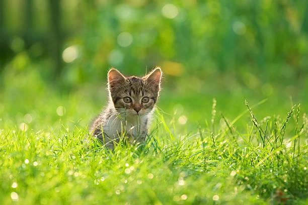 Cat playing on the grass picture id172964827?b=1&k=6&m=172964827&s=612x612&w=0&h=btaaki2aguhwxw 1y7 3fobliyj6gssjtty8m3ds8vi=