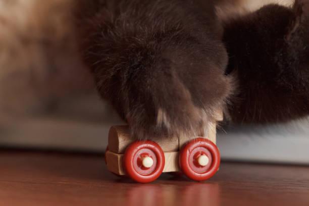 Cat playing paw with toy train picture id875575920?b=1&k=6&m=875575920&s=612x612&w=0&h=lfgzmxa0osy58wjd1 7eszfqhnmttxeav6dvnomu dy=