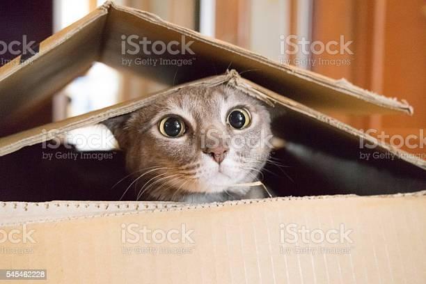 Cat playing peek a boo in a box picture id545462228?b=1&k=6&m=545462228&s=612x612&h=sx2wpwpe9uixpxvb69ol1trafcltm2epjgutl9l8ftq=