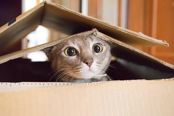 Cat playing peek a boo in a box picture id545462228?b=1&k=6&m=545462228&s=612x612&w=0&h=4y7s32mbbt585e8dluwygjf6ippc6woamhrzbysqkhw=