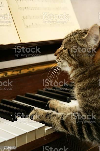 Cat playing piano picture id157509443?b=1&k=6&m=157509443&s=612x612&h=baxqtbbcllct5ff4g8s0evduvfyp2omj9xvgbdqgbqo=