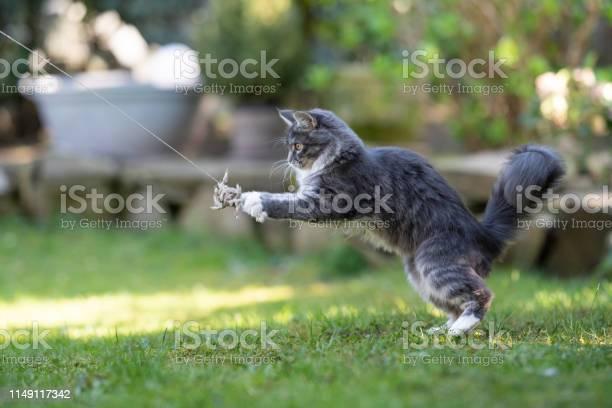 Cat playing picture id1149117342?b=1&k=6&m=1149117342&s=612x612&h=icxd7jtf nucjdf2bv9nffmrzgxyqj  fm0apwk46ds=