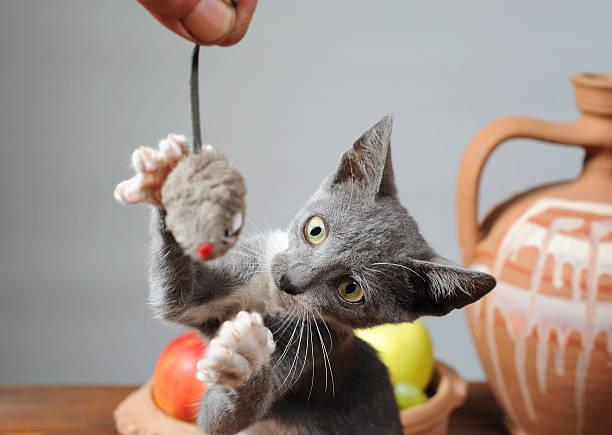 Cat playing picture id183628372?b=1&k=6&m=183628372&s=612x612&w=0&h=bmvnz7xj5ch5sgg9sn21 ebpk8ulf0fn7xnpzsdqfay=