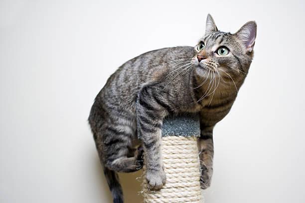 jouer au chat - moustaches animales photos et images de collection