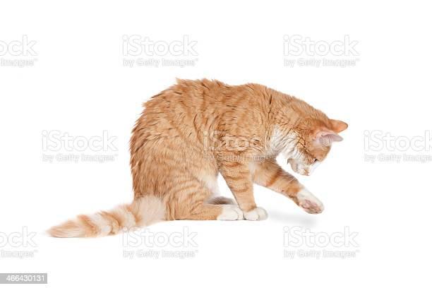Cat playing picture id466430131?b=1&k=6&m=466430131&s=612x612&h=9dylxaudusvd0ww36kqdbv5vmnb0uyk htx6vhnjuxk=