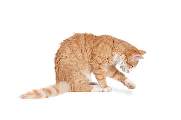 Cat playing picture id466430131?b=1&k=6&m=466430131&s=612x612&w=0&h=1 9j6oad4pggsb084gyiowt3zsarenzk4simnbilsfo=