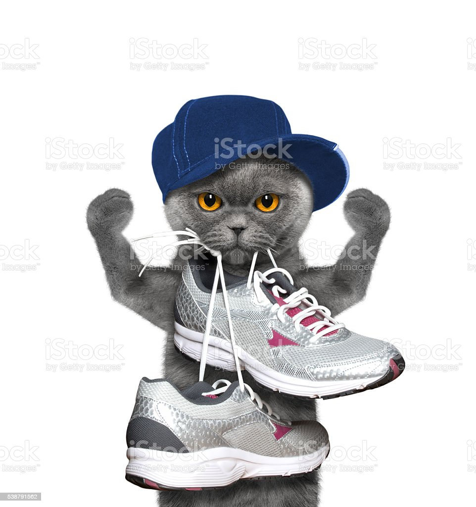 Cat playing sports -- running and jogging stock photo