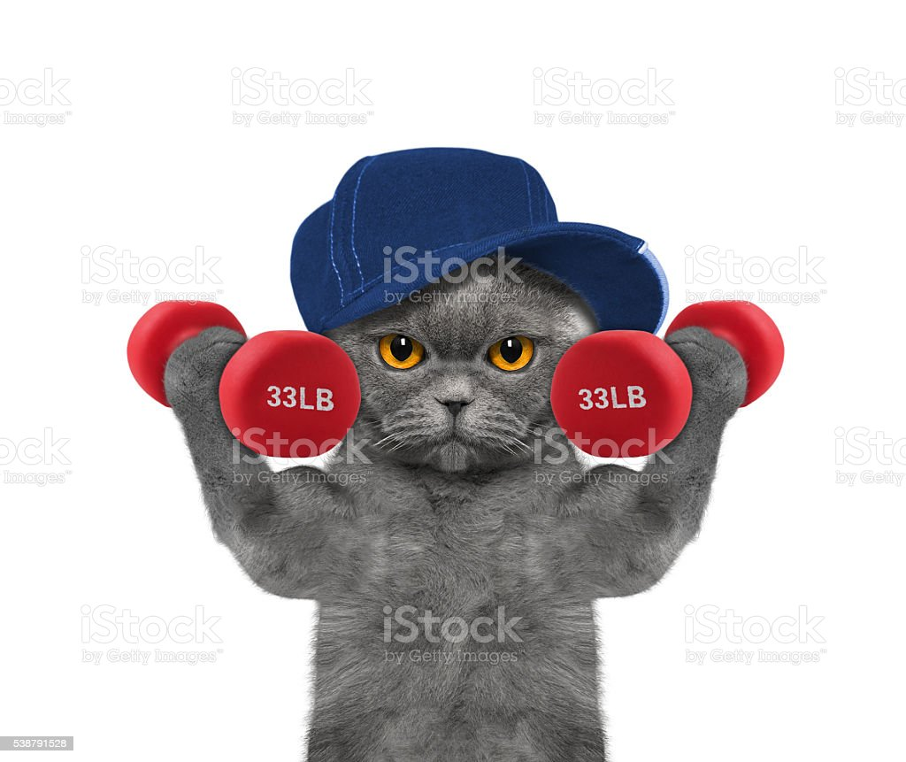 Cat playing sports with dumbbells stock photo