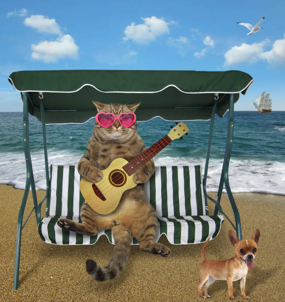 Cat playing the guitar on the beach 2 picture id1142155806?b=1&k=6&m=1142155806&s=612x612&w=0&h=tzip7s6e2d8u53vpajbwp5jbfk1hnkwfv9ozk pua5w=