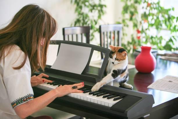 Cat playing the piano picture id880331672?b=1&k=6&m=880331672&s=612x612&w=0&h=ejdkomwc97rmodghca i 1zzmagtw nsyjtme7l94wu=