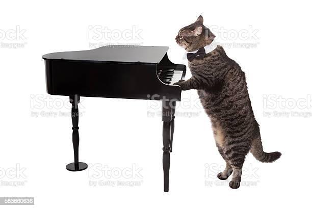 Cat playing toy piano picture id583860636?b=1&k=6&m=583860636&s=612x612&h=voiihthvdccvt124jwjr2fxyuuaepzdrwg29rxr52qi=