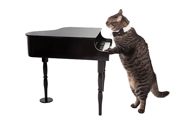 Cat playing toy piano picture id583860636?b=1&k=6&m=583860636&s=612x612&w=0&h=3 8oqfvwezkwvqbxwlhy ximo2 auhvwxngonvzo6ww=