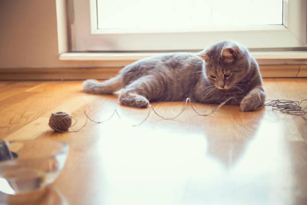 Cat playing with a ball of string picture id672901824?b=1&k=6&m=672901824&s=612x612&w=0&h=rmaqams9kpmn aqxkwtcbib euill rfevsov7bhrx8=