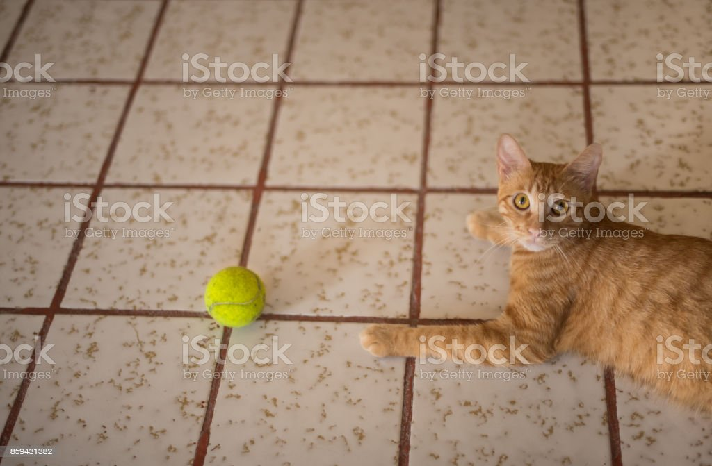 cat playing with a ball stock photo