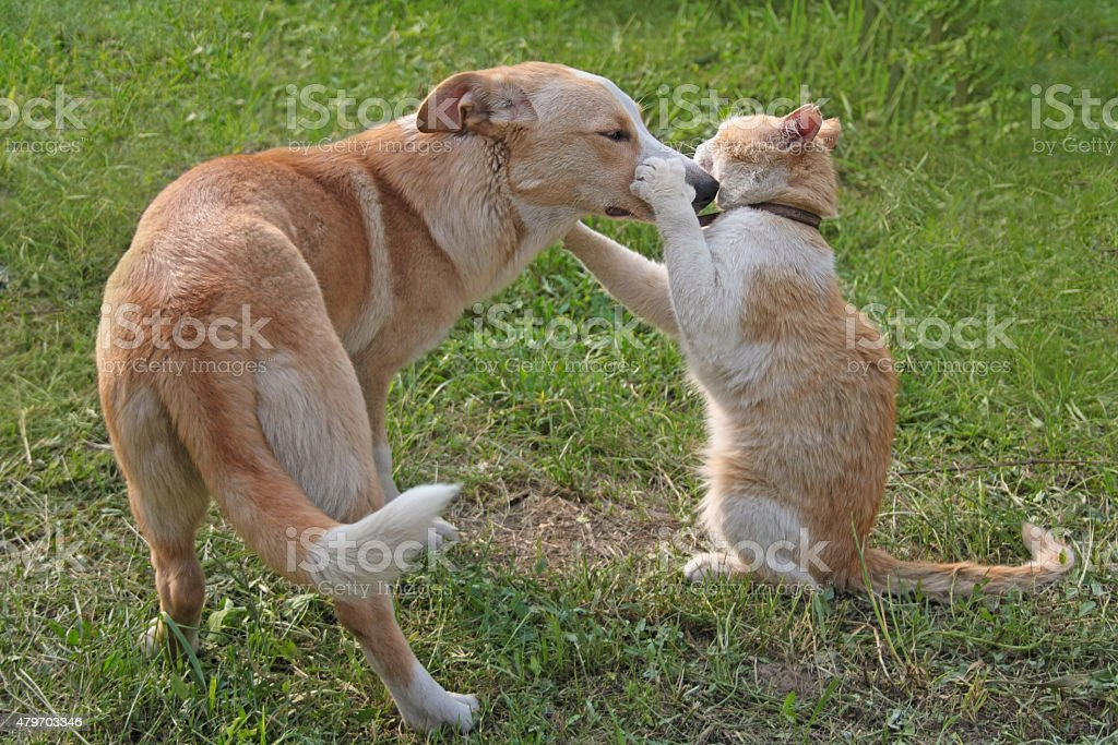 Cat playing with a dog stock photo