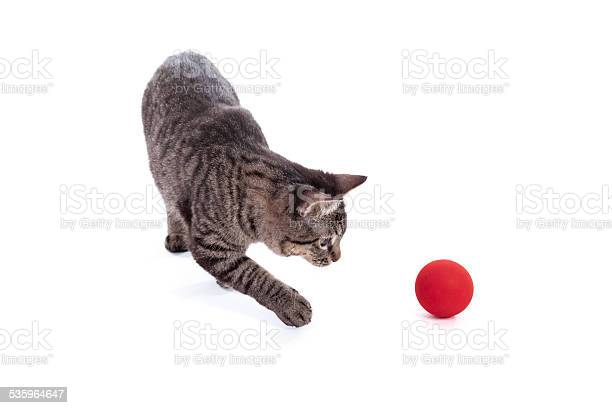 Cat playing with ball picture id535964647?b=1&k=6&m=535964647&s=612x612&h=ibiwgqxds5v0xjkbflcxigv0zmjm2yrbj9uszc jznu=