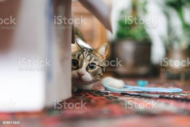 Cat playing with boxes and toys picture id928511642?b=1&k=6&m=928511642&s=612x612&h=pv55k0jrqhoxhu4di  jlbzrguwxhcks2tfrhrvf5e8=