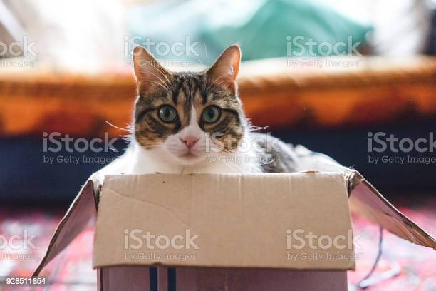 Cat playing with boxes and toys picture id928511654?b=1&k=6&m=928511654&s=612x612&h=fu0wutepyis4ha  yiyec0vrnmrolnwj yjkfsaviji=