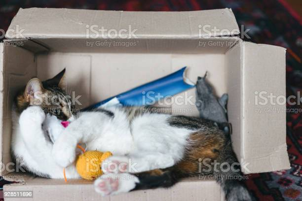 Cat playing with boxes and toys picture id928511696?b=1&k=6&m=928511696&s=612x612&h=3i8i1finkos7c5pisjyijwy3ltjcghj7u6nza2zn8l0=