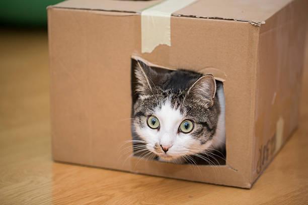 Cat playing with cardboard box picture id545569334?b=1&k=6&m=545569334&s=612x612&w=0&h=xankaargog9nyqqs14dta4kb9rufojupe5b5jrrt3c4=