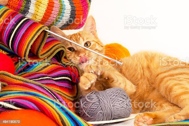 Cat playing with clew of threads and knitting needle picture id494190570?b=1&k=6&m=494190570&s=612x612&h=9c 6jt8lci mwvp2n aditbwrnpaohxb qoxtzingui=
