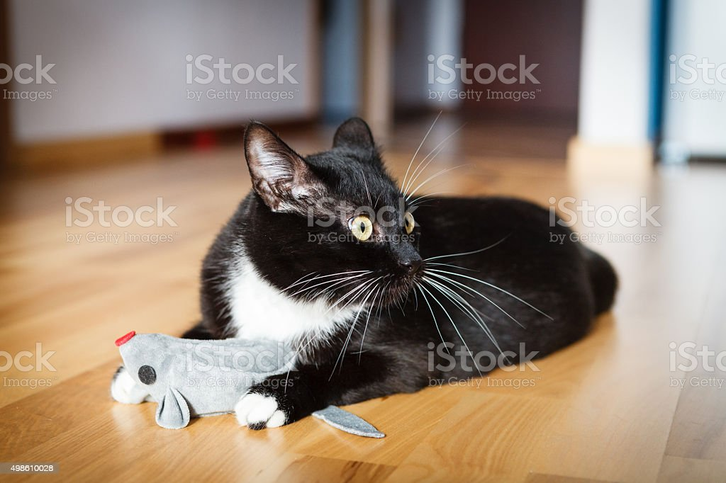 Cat playing with mouse-toy stock photo