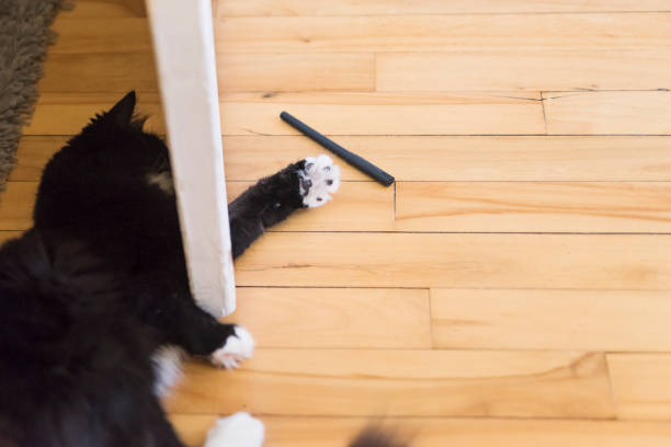 Cat playing with pen under a door. stock photo