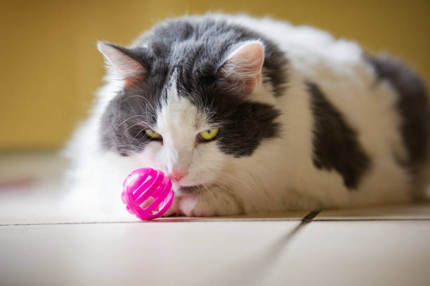 Cat playing with pink ball picture id676007692?b=1&k=6&m=676007692&s=612x612&w=0&h=bpag2touzitoo44vy4wsblfshs0rffzjkxc6rakx i0=