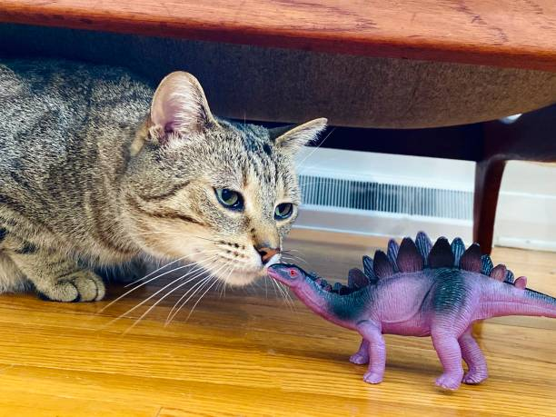 Cat playing with purple toy dinosaur picture id1224231224?b=1&k=6&m=1224231224&s=612x612&w=0&h=gsqc6y4ohfzsrdzjzsmwj0yghxf3 95sgccnoz6lz7w=