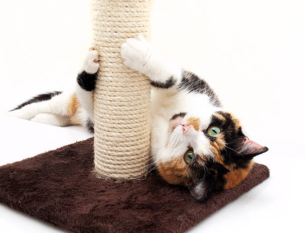 Cat playing with scratching post picture id174796258?b=1&k=6&m=174796258&s=612x612&w=0&h=yo2oywpp plwfitxds8havo0ro1gepw3l1bkomr n5u=