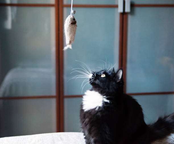 Cat playing with toy fish on bed. stock photo