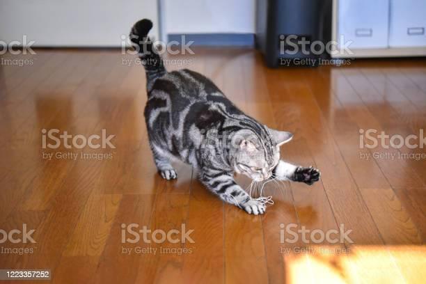 Cat playing with wire picture id1223357252?b=1&k=6&m=1223357252&s=612x612&h=21nth1tvimpsearrayex4m2pvj44piwmxigqcwgfbii=