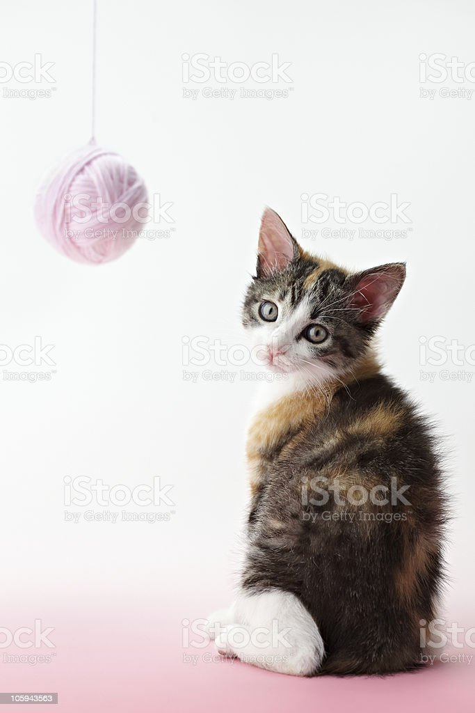 cat playing with yarn royalty-free stock photo