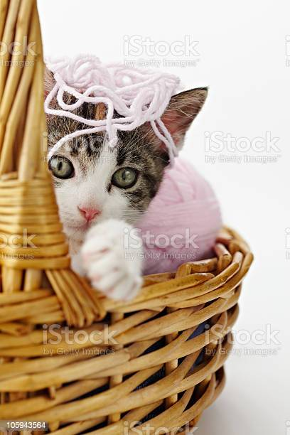 Cat playing with yarn picture id105943564?b=1&k=6&m=105943564&s=612x612&h=mxilafo1cl stagtcxrd wzlxkyjsa7gzuw9pl8ybls=