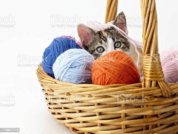 Cat playing with yarn picture id176817175?b=1&k=6&m=176817175&s=612x612&h=cqjeta  lstsmxp47cmzegghlyltqeurmejcekkhzim=