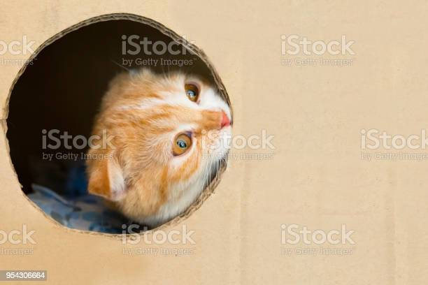 Cat plays hide and seek in a cardboard box picture id954306664?b=1&k=6&m=954306664&s=612x612&h=da9kyahmgd5t28jmioiy ol4o 1qrhaxp6eiv9ttijc=