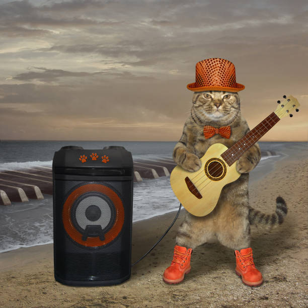 Cat plays the guitar near the speaker 3 stock photo