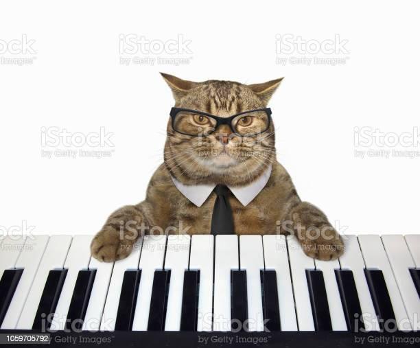 Cat plays the piano 3 picture id1059705792?b=1&k=6&m=1059705792&s=612x612&h=maseo4xs563bvkoju ovmdkaegm57qltooqq2btpwmo=