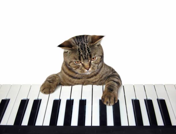 Cat plays the piano picture id1058818350?b=1&k=6&m=1058818350&s=612x612&w=0&h=zj3imgw qqftqcpwbytvgtmklsubmh3lm0bgu4n1k3a=
